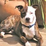 Rory dog