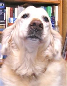 Jaffa dog