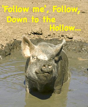 follow hog mud